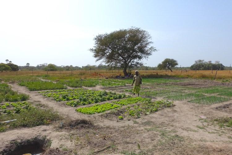 Le très jolie jardin des femmes à Kamobeul en Casamance photo blog voyage tour du monde https://yoytourdumonde.fr
