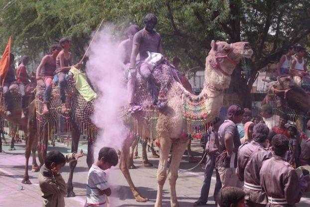 les locaux font la fete des couleurs ou de holi accompagné par leurs chameaux pour le plus grand plaisir des touristes, cela donne une tonalité encore plus indienne photo voyage tour du monde https://yoytourdumonde.fr