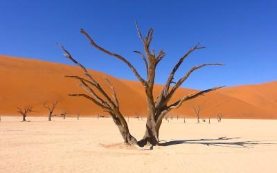 Deadvlei est un vaste salarié entouré de dune rouge et d'arbres pétrifiés