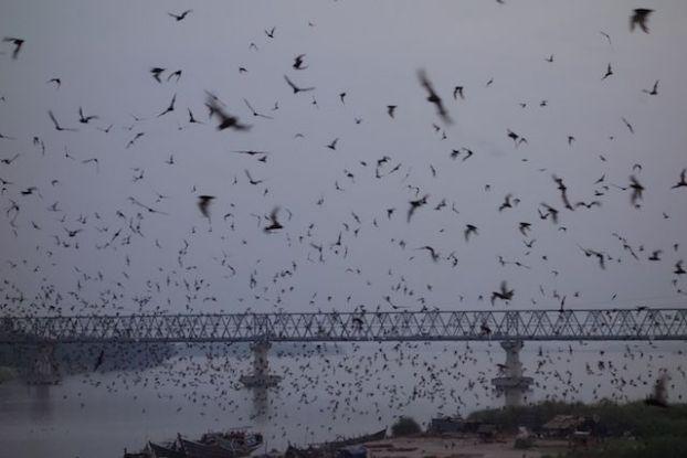 Des milliers de chauve-souris quittent la montagne pour aller manger photo blog tour du monde hpa-an
