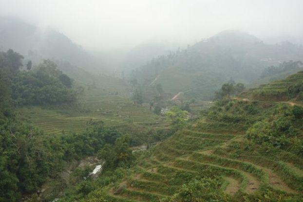 Terrasses en rizières entre Lao Cai et Sapa.