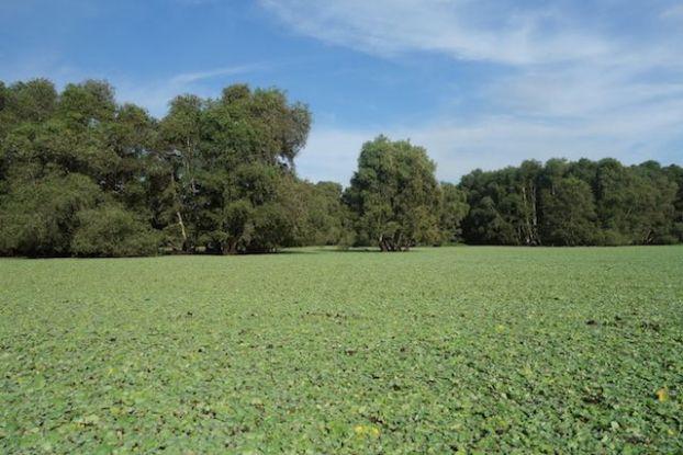 La mangrove de Chau Doc possede une reserve ornothologique magnifique pres du Delta du Mekong https://yoytourdumonde.fr