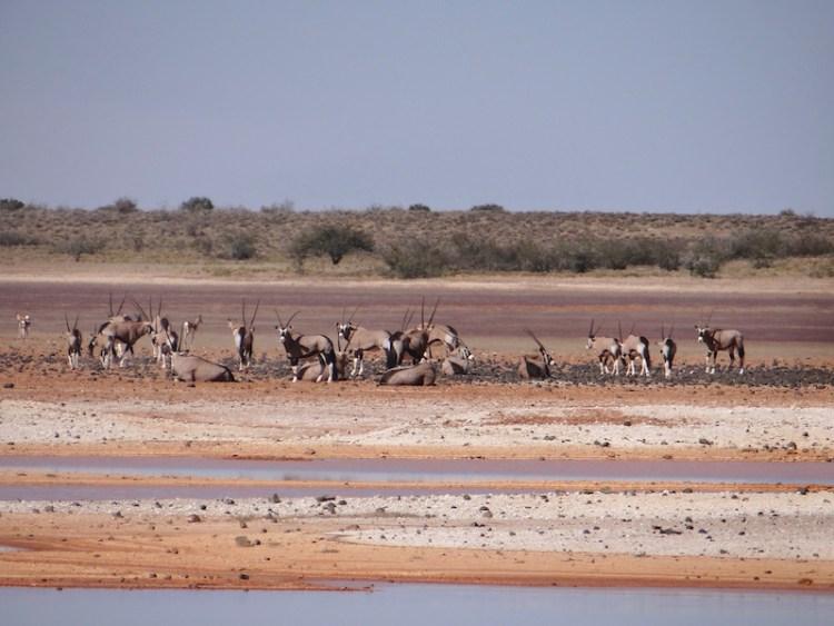 Oryx ou antilope du désert à Hardap en Namibie photo blog voyage tour du monde https://yoytourdumonde.fr