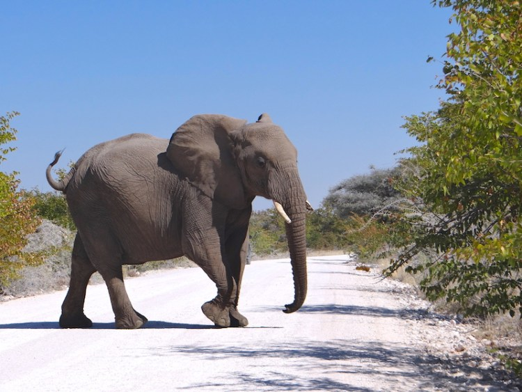 Elephant Etosha Namibie photo blog voyage tour du monde travel Afrique https://yoytourdumonde.fr