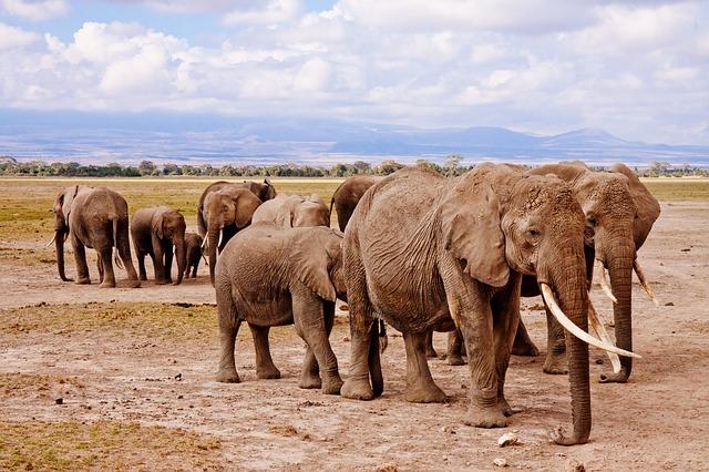 L'Afrique est un continent magnifique avec de nombreux parcs à visiter. Photo blog voyage tour du monde https://yoytourdumonde.fr