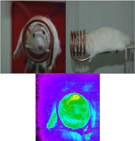 Η πειραματική διάταξη της μαγνητικής υπερθερμίας: Στο κάτω μέρος η θερμοφωτογραφία (το κόκκινο και κίτρινο δείχνουν την αυξημένη θερμοκρασίαχρώμα