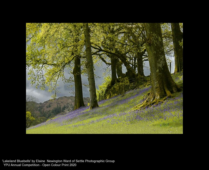 Settle Photographic Group_Elaine Newington Ward_Lakeland Bluebells
