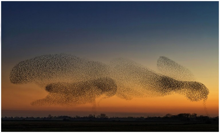 YOPS23653_Antony Ward_Murmuration Lower Derwent Valley_800px