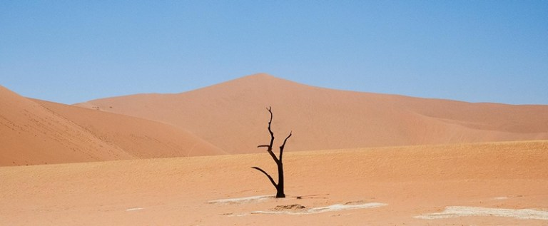 HOLM22360_Reg Senior_The Tree and the Dune_800px