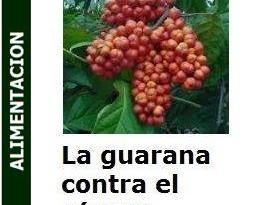 La_-guarana_contra_el_cancer_portada