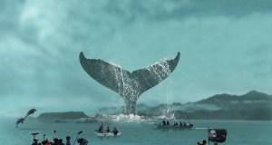 TaleofaWhale Poster Web - A Whale of a Tale- Trailer @awhaleofatale18