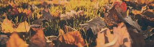 fall-bg1