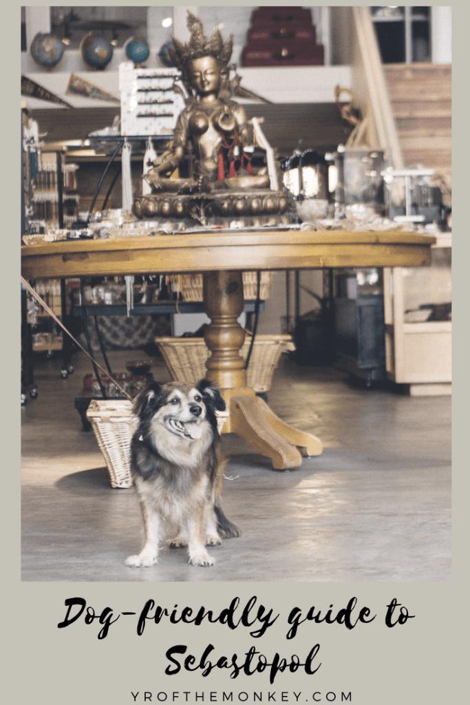 Dog friendly sebastopol guide