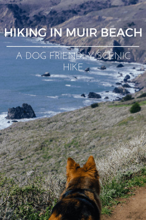 Dogs hiking Muir beach lookout Bay area GGNRA California Marin