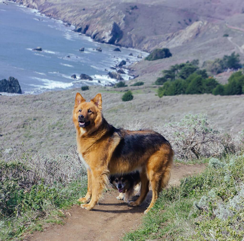 Dog Friendly Restaurants North Beach San Francisco