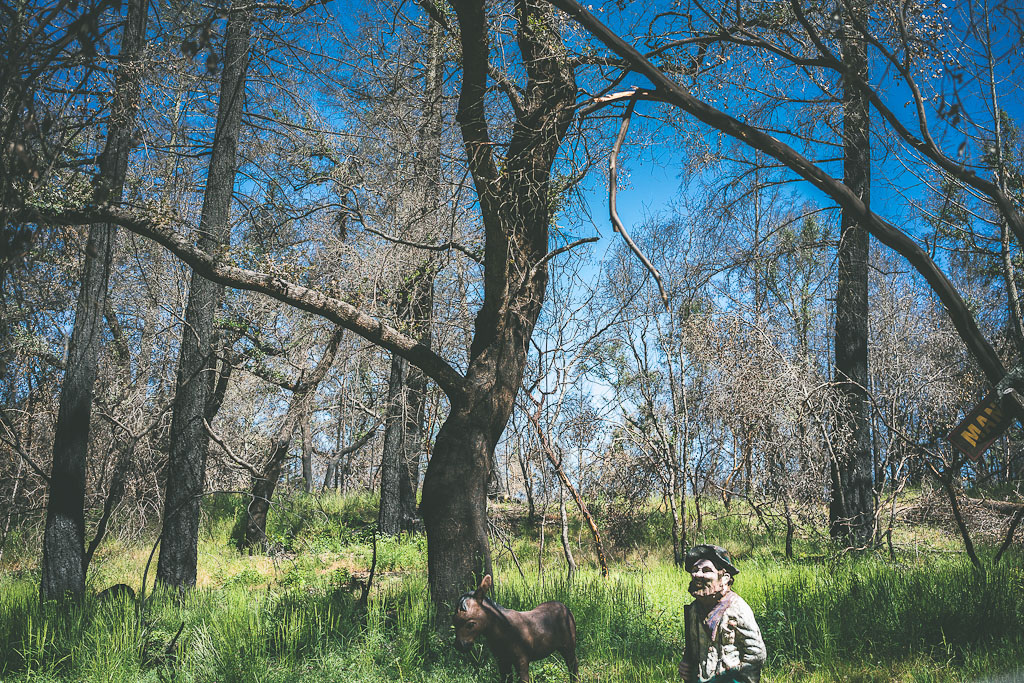 petrified forest Calistoga dog friendly Calistoga