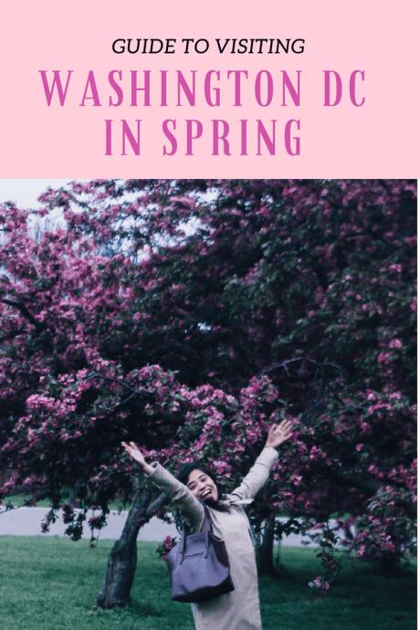 Cherry blossoms USA Washington DC Travel USA America