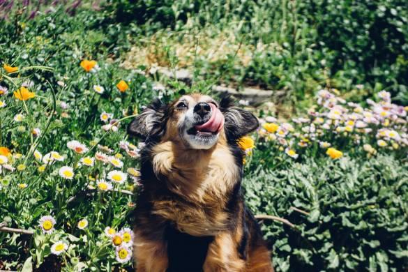 Buena Vista Park San Francisco dogs pets dogpark park hiking California Bay Area nature spring flowers