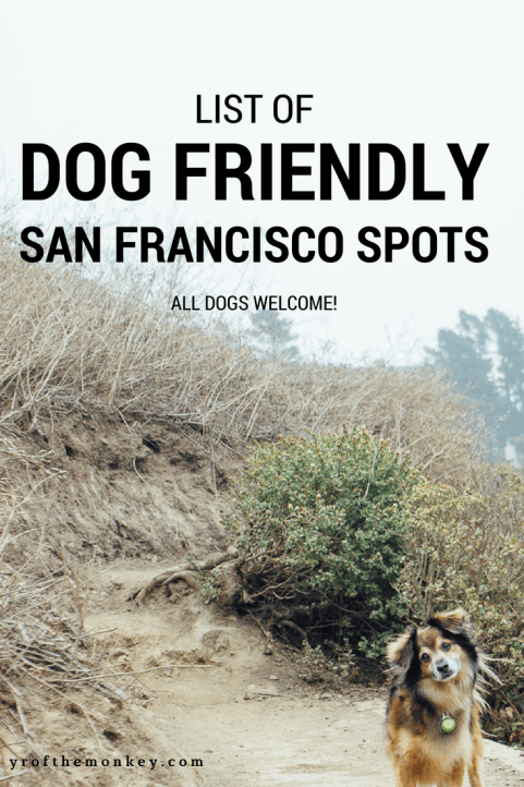 Dog Friendly San Francisco spots
