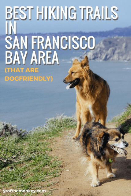 Best hiking trails in San Francisco Bay Area, California, USA is a great resource for hikers, nature lovers and dog parents because these are dog, pet friendly hiking trails. Featuring places in San Francisco Presidio, north of Golden Gate bridge at Muir beach lookout and many more places with spectacular views, this post is a must read for hikers and dog lovers