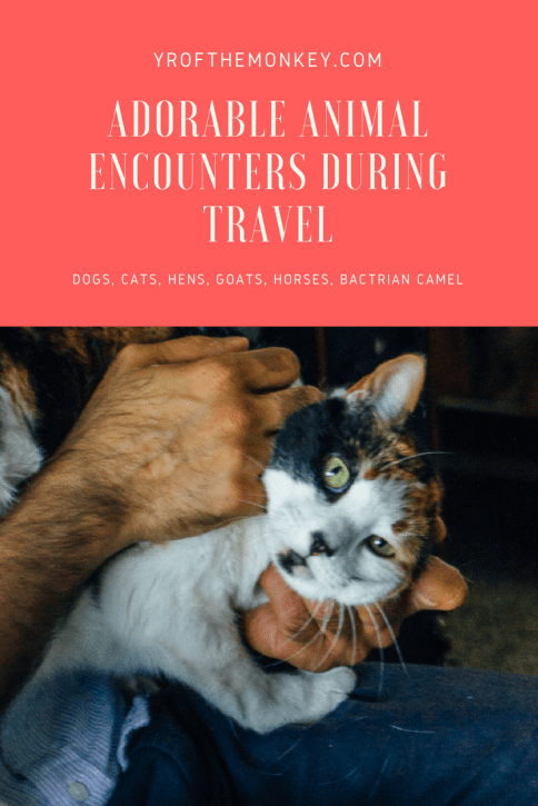 animal encounters animals dogs cats travel pets