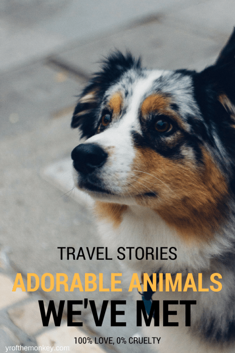 animal encounters animals pets travel dogs cats