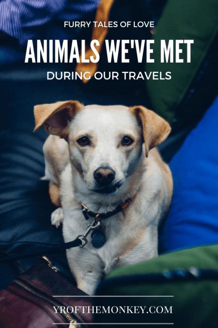 Animal encounters pets dogs cats travel USA Turkey Istanbul