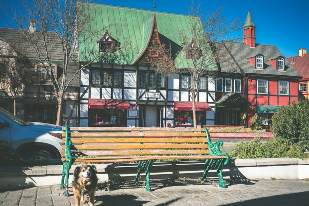 Solvang Dog Friendly Wineries