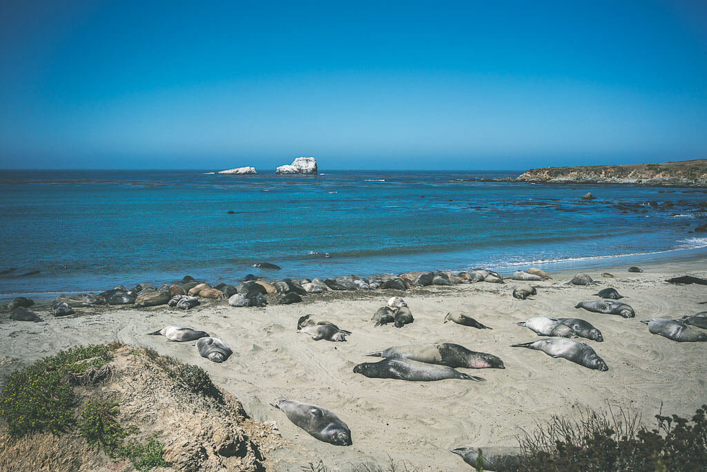 Elephant seal rookery in San Simeon, Big Sur road trip stops, Big Sur guide