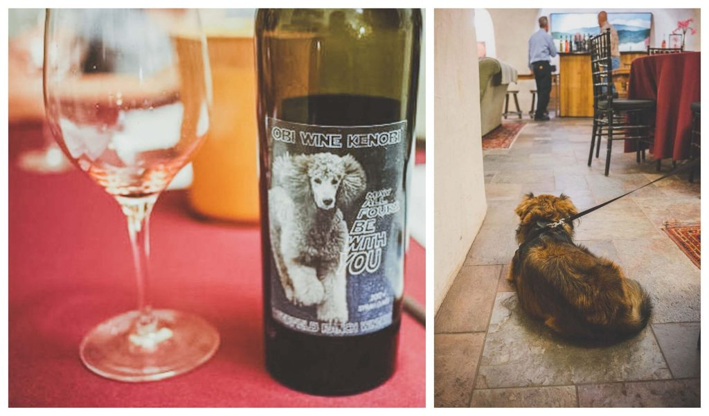 dog friendly wineries in Sonoma, dog friendly wine tasting in Sonoma, sonoma dog friendly wineries, California wineries that welcome dogs, dry creek wineries, Russian river wineries, dry creek valley, Healdsburg wineries, Kenwood wineries, Deerfield ranch winery