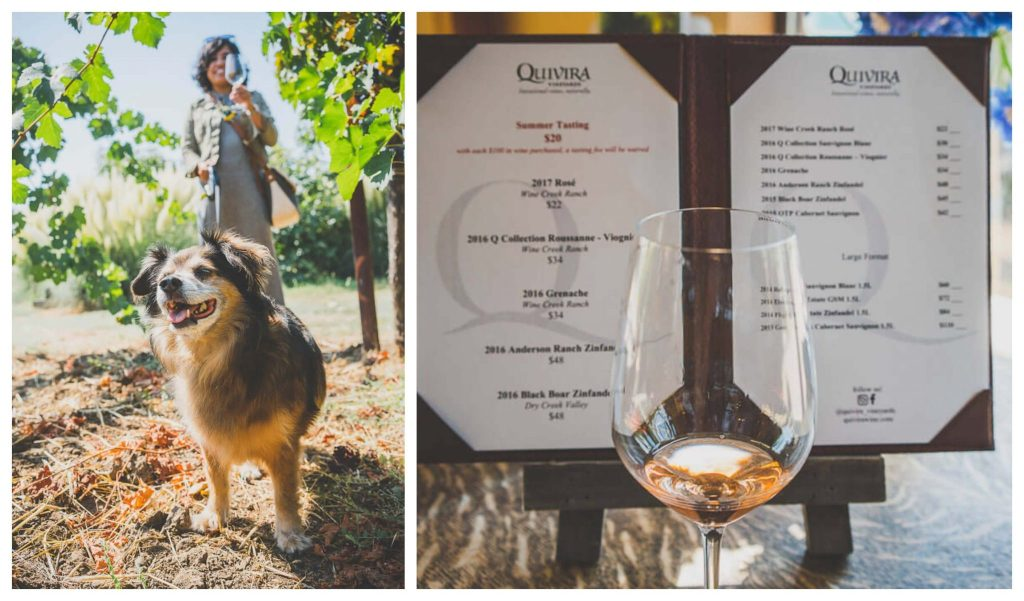 dog friendly wineries in Sonoma, dog friendly wine tasting in Sonoma, sonoma dog friendly wineries, California wineries that welcome dogs, dry creek wineries, Russian river wineries, dry creek valley, Healdsburg wineries, Kenwood wineries, Quivira