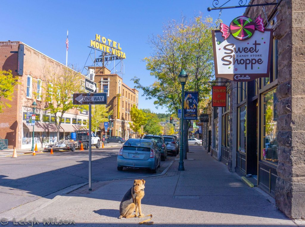 Most dog friendly cities in US, American cities that are dog friendly, dog friendly cities in USA, where to take your dog in USA, downtown Flagstaff, Arizona