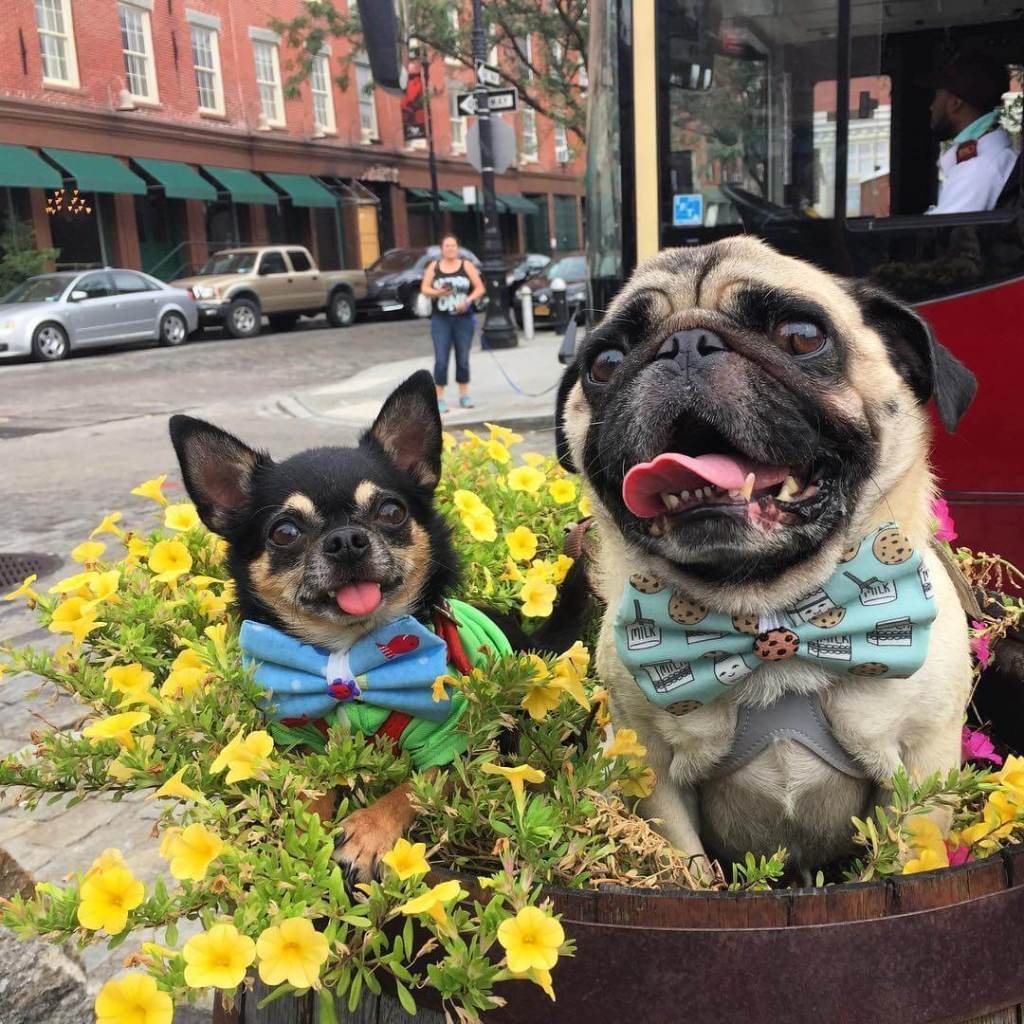 Most dog friendly cities in US: A guide by traveling pet parents