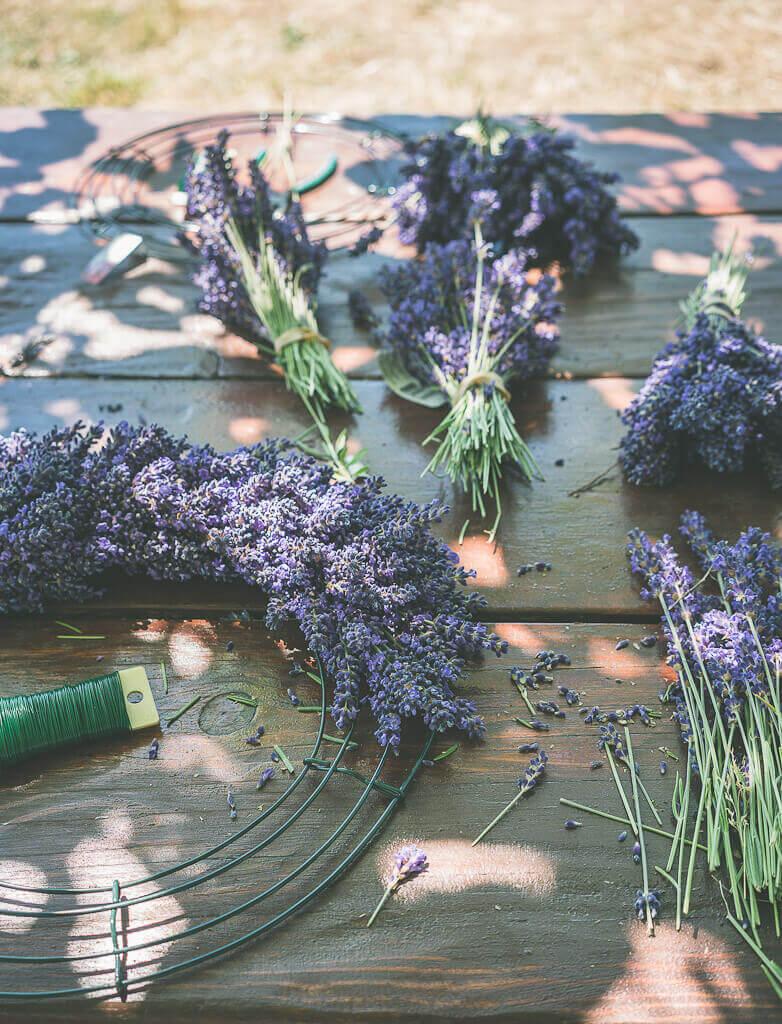 US lavender farms and fields, cut lavender bunch, lavender products, lavender flowers