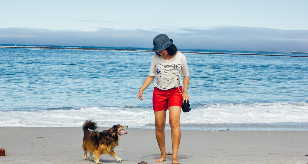 Carmel city beach is one of the most dog friendly beaches in California