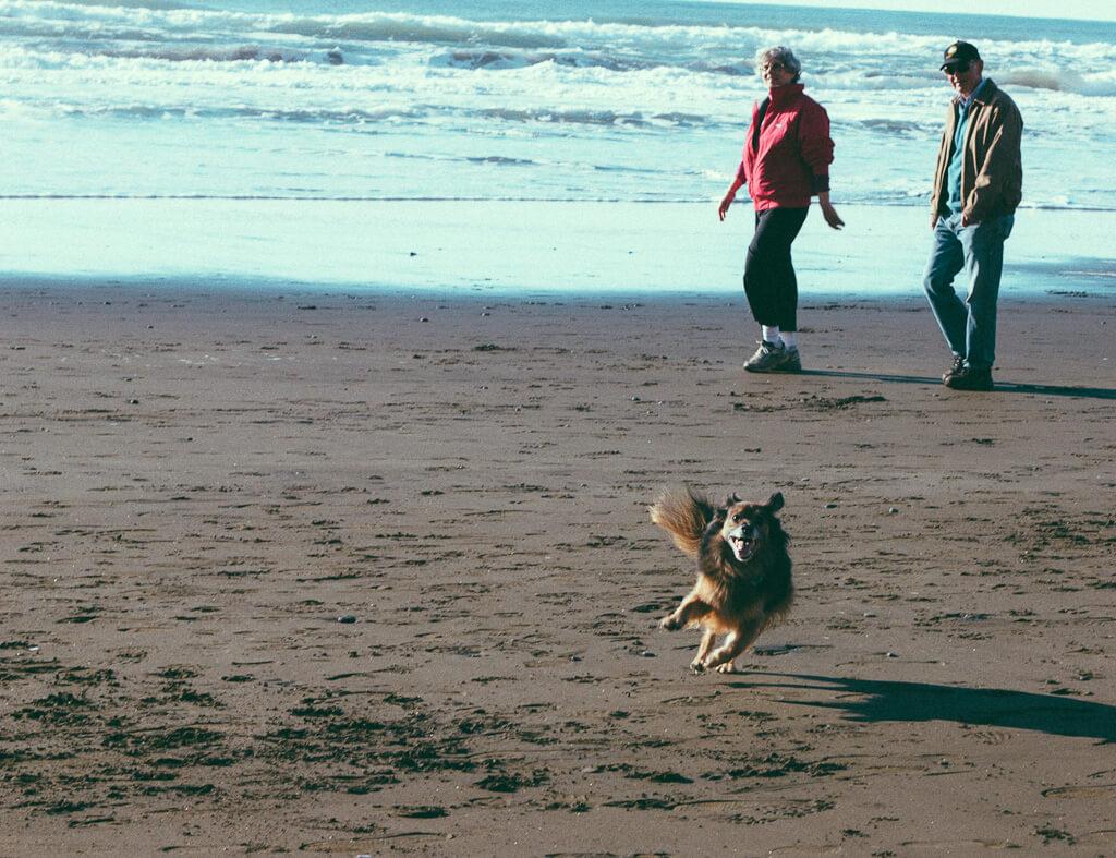 Fort Funston is a very popular dog friendly beach in San Francisco, California