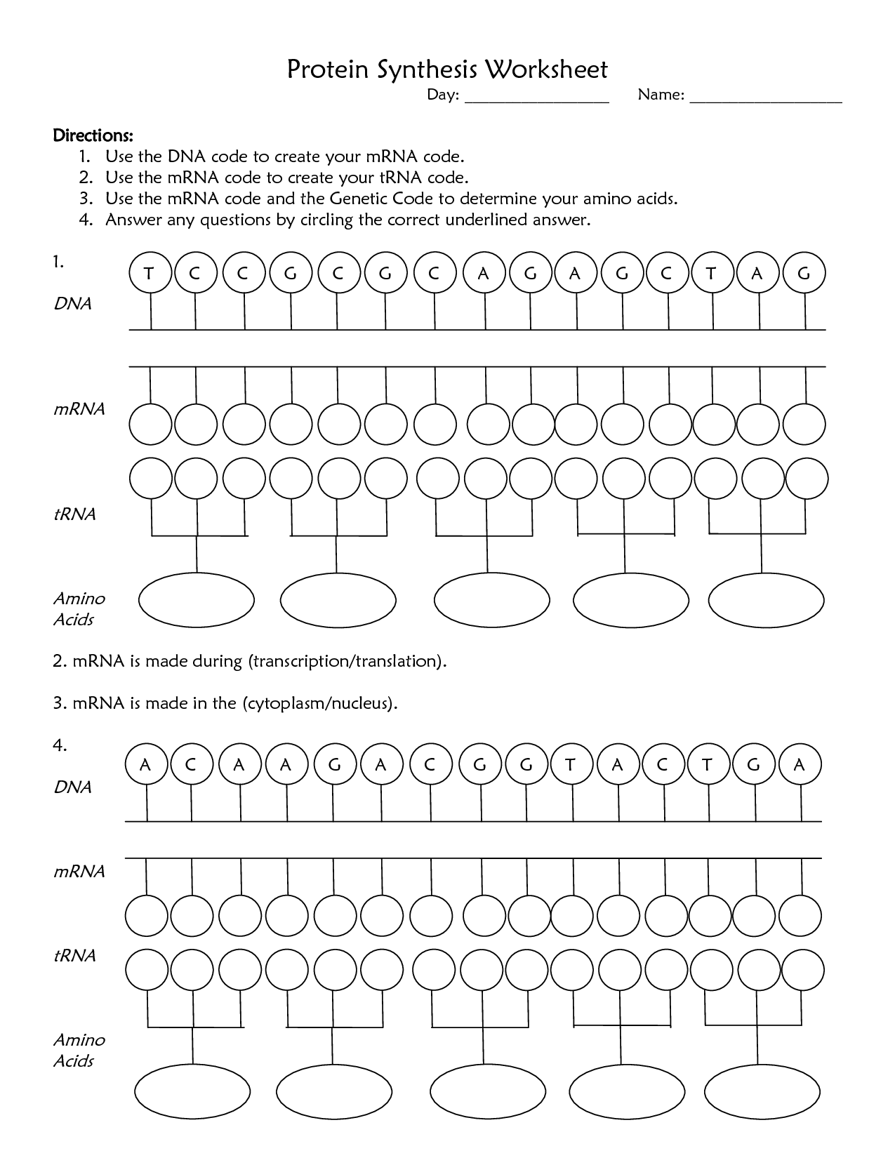 Worksheet Determination Of Protein Amino Acids From Mrna