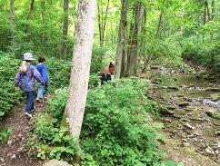 along Birch Creek