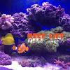 Reef Life Spain