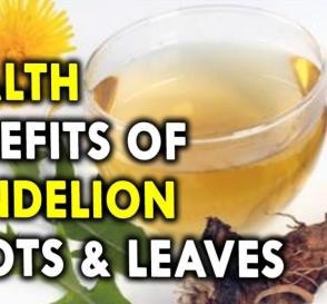 Health Benefits of Dandelion Roots and Leaves Health Benefits of Herbs