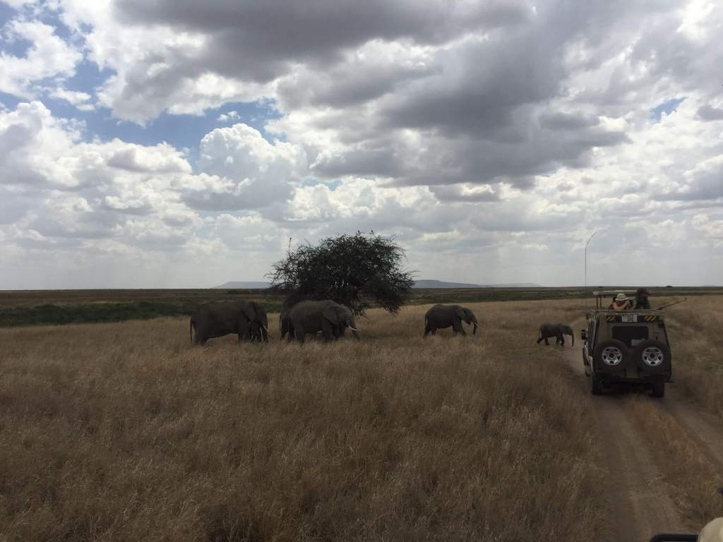 serengeti elephants crossing