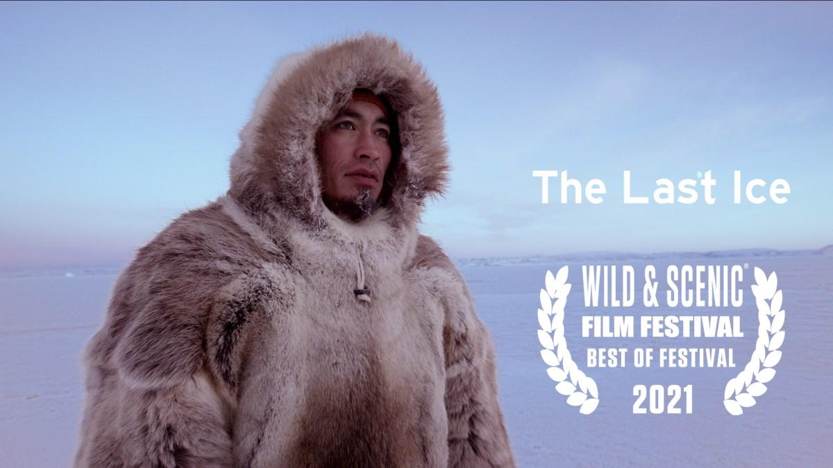 Wild Film 2021