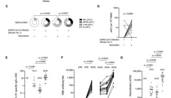 Impact of prior natural infection with SARS-CoV-2 during the first wave on T and B cell responses to a single dose of the mRNA COVID-19 vaccine, BNT162b2.
