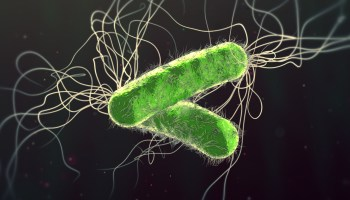 antibiotic resistant Pseudomonas aeruginosa bacterium