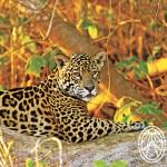 Descubre el Poderío del Jaguar