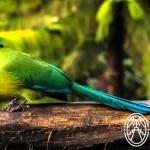 Birdwatchers in Yucatán: Festival de las Aves Toh