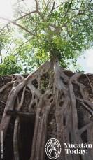 Mayaland-Adventures-Vintage-Car-Experiences-Arbol-Tree-Hacienda