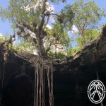 A Complete Guide for a Visit to the Homún Cenotes