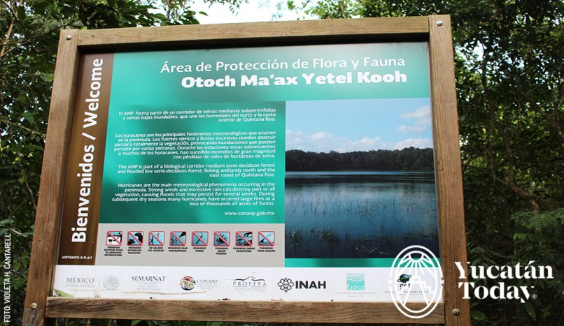 Punta-Laguna-reserva-biological-corridor-by-Violeta-H-Cantarell