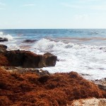New Life for Sargassum in Yucatán